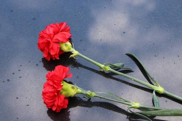 two-red-carnations-4177589_640